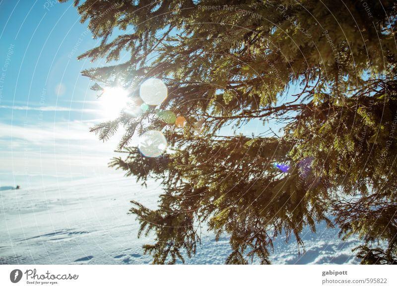 Wetter | Winterrückschau Umwelt Landschaft Himmel Wolkenloser Himmel Sonne Schönes Wetter Eis Frost Schnee Pflanze Baum Tanne Tannenzweig Nadelbaum Wald