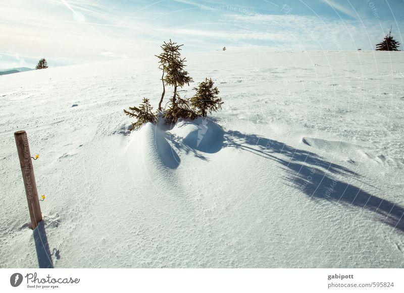 Auf dem Belchen Umwelt Natur Landschaft Erde Himmel Winter Schönes Wetter Eis Frost Schnee Baum Berge u. Gebirge Gipfel Schneebedeckte Gipfel frisch kalt weiß