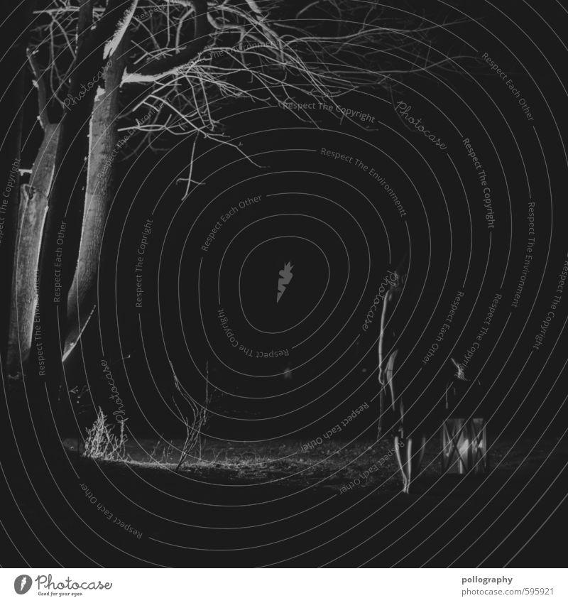 lantern (4) Mensch feminin Junge Frau Jugendliche Erwachsene Leben Körper 1 18-30 Jahre Natur Pflanze Herbst Winter Baum Sträucher Park Kleid Stimmung Angst