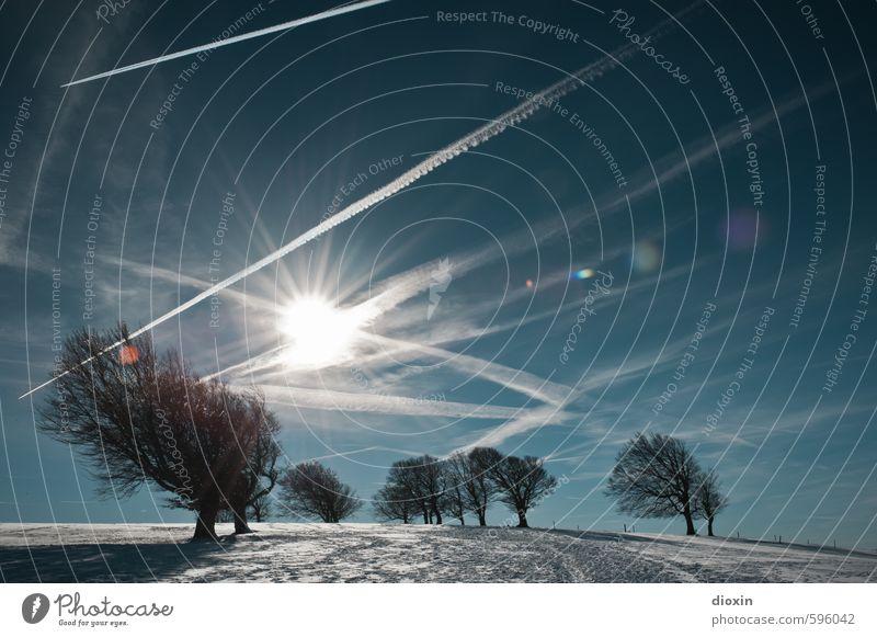 Rückkehr zu den Wetterbuchen [2] Himmel Natur Ferien & Urlaub & Reisen Pflanze Sonne Baum Landschaft Winter kalt Umwelt Berge u. Gebirge Schnee natürlich Eis Wetter leuchten