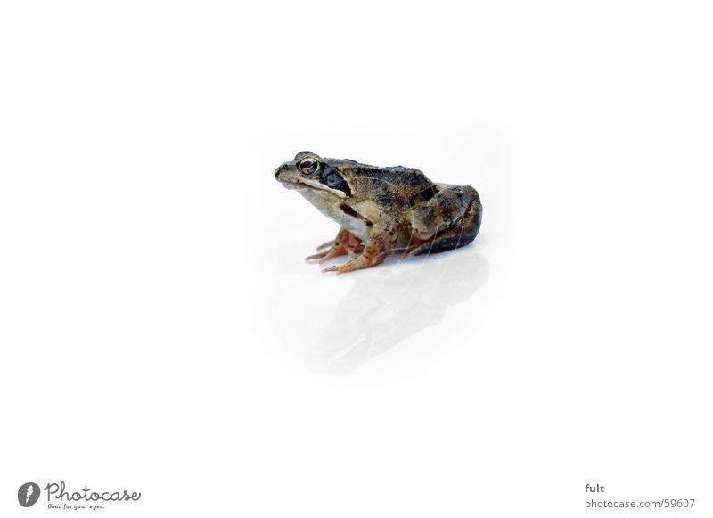 frosch Natur Auge Tier warten sitzen Frosch Froschlurche