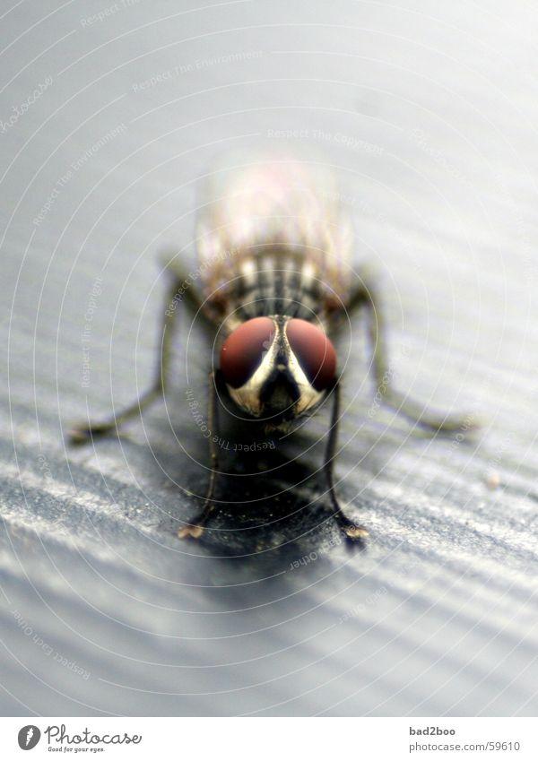 fliege macht pause Auge Tier Beine warten sitzen Fliege Flügel Insekt ruhen Facettenauge