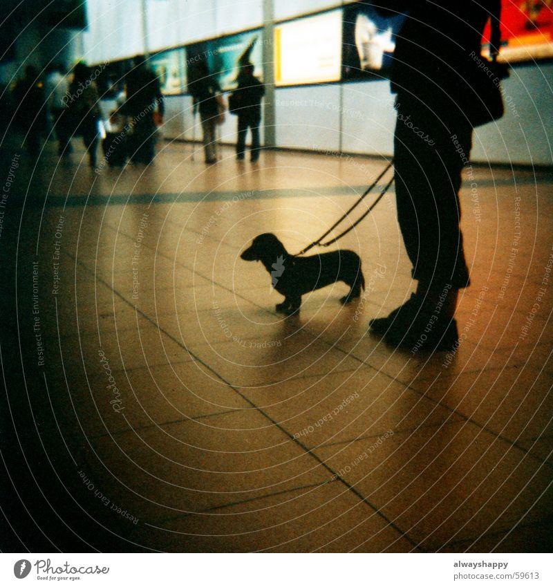 Dackelblut dunkel Hund Beine warten Seil Flughafen Mittelformat Freundschaft Tierliebe Tierfreund