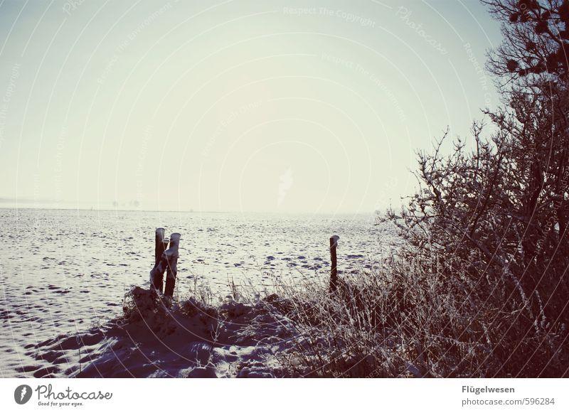 Winterstimmung Natur Landschaft kalt Umwelt Schnee Schneefall Wetter Eis Klima Frost frieren Klimawandel schlechtes Wetter Winterurlaub Hagel