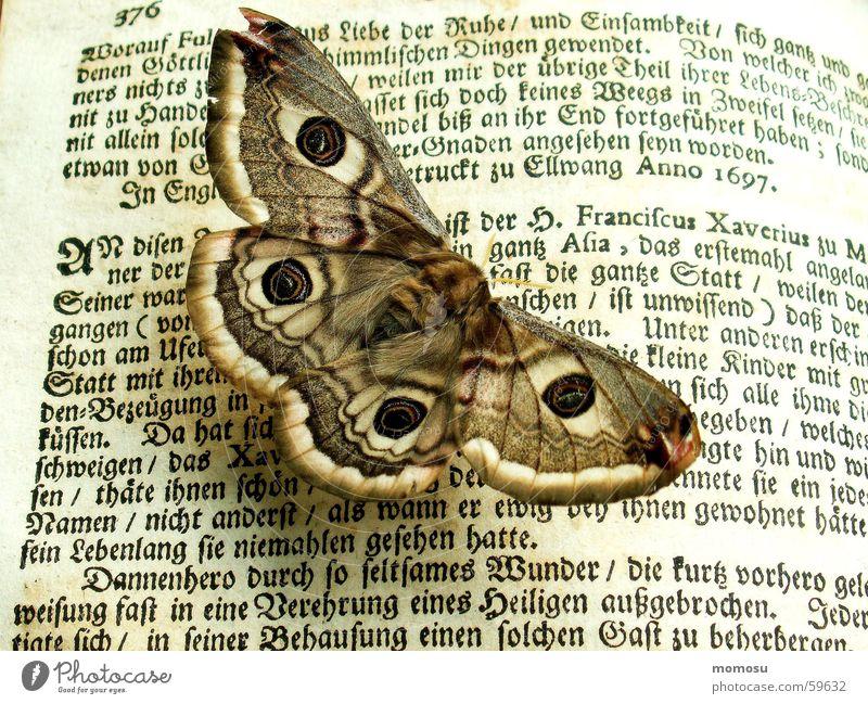 belesen Großes Nachtpfauenauge Schmetterling Buch Buchstaben antik Schriftzeichen alt