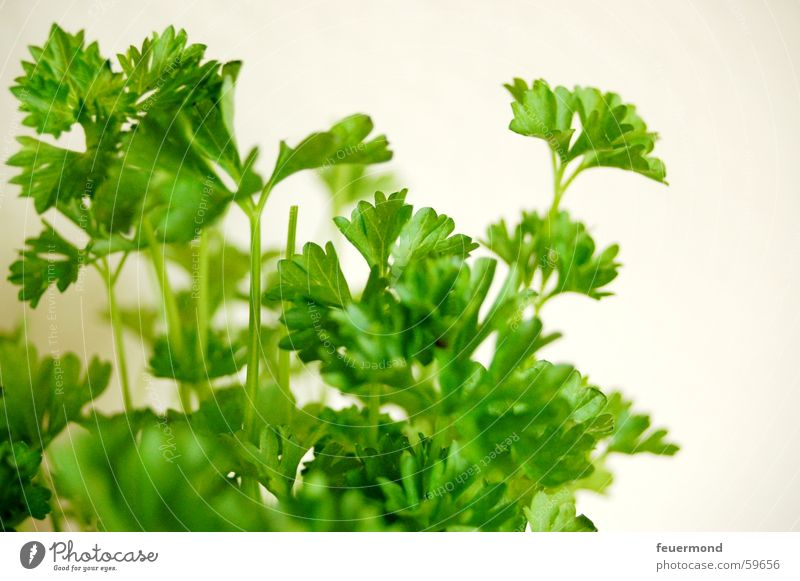 Jetzt wirds gesund... Petersilie Kräuter & Gewürze Grünpflanze Gesundheit Ernährung Lebensmittel Pflanze grün Gemüse Essen zubereiten Makroaufnahme Menschenleer