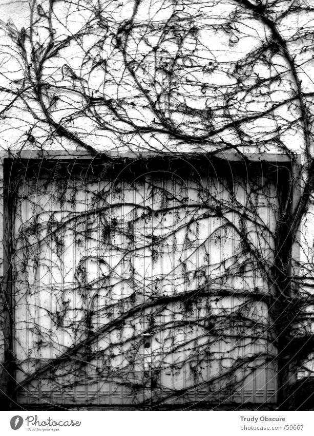 durchwachsene perspektive Garage Garagentor Kammer Wand Haus Mauer Ranke Pflanze Naturwuchs stauraum verwachsen bewachsen