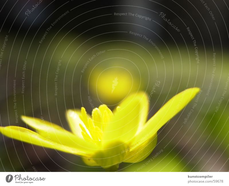 SonnenStrahlen Natur grün Sommer Blume Tier gelb Wiese Wand Gras Frühling Garten Bauernhof Nationalpark Sumpf Wiesenblume