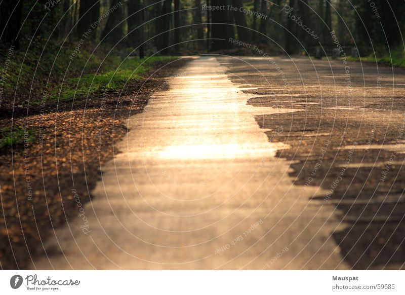 Führ mich zum Schotter Sonne Sommer Wald Erholung Glück Wege & Pfade gold Lichtspiel schimmern