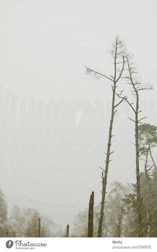 Erstes 2014 | Trübe Aussichten Himmel Natur Pflanze Baum Landschaft ruhig Winter Umwelt Herbst grau natürlich Nebel trist leer Vergänglichkeit kahl