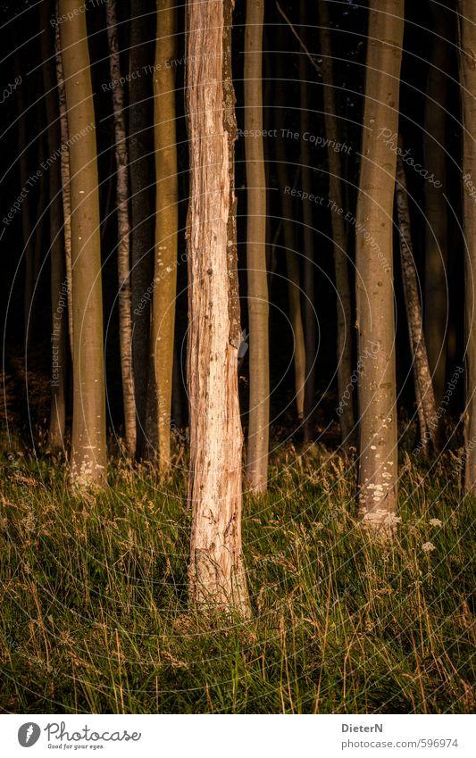 Licht Baum Gras Wald Ostsee braun grün orange Mecklenburg-Vorpommern Gespensterwald Farbfoto Außenaufnahme Abend Dämmerung Sonnenlicht Sonnenaufgang
