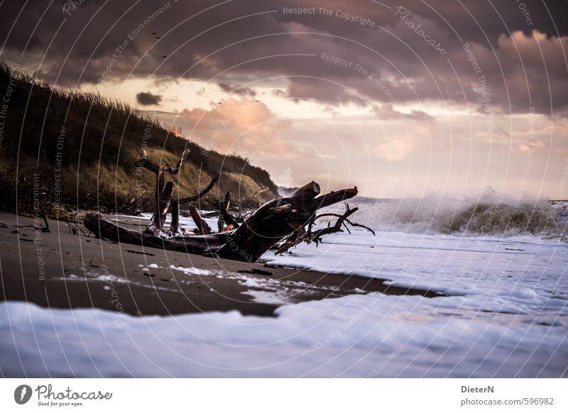 Strandgut Sand Wasser Himmel Wolken Gewitterwolken Sonnenlicht Herbst Unwetter Wind Sturm Sträucher Ostsee rosa schwarz weiß Wellen Baumstamm Gischt Küste