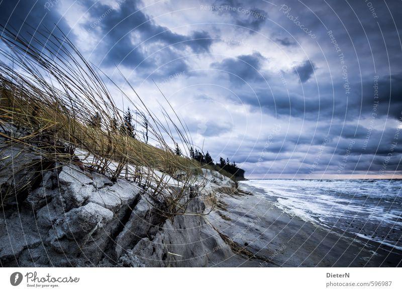 Sturm Himmel blau weiß Wasser Baum Meer Landschaft Wolken Winter Gras Sand braun Horizont Wetter Erde Wind