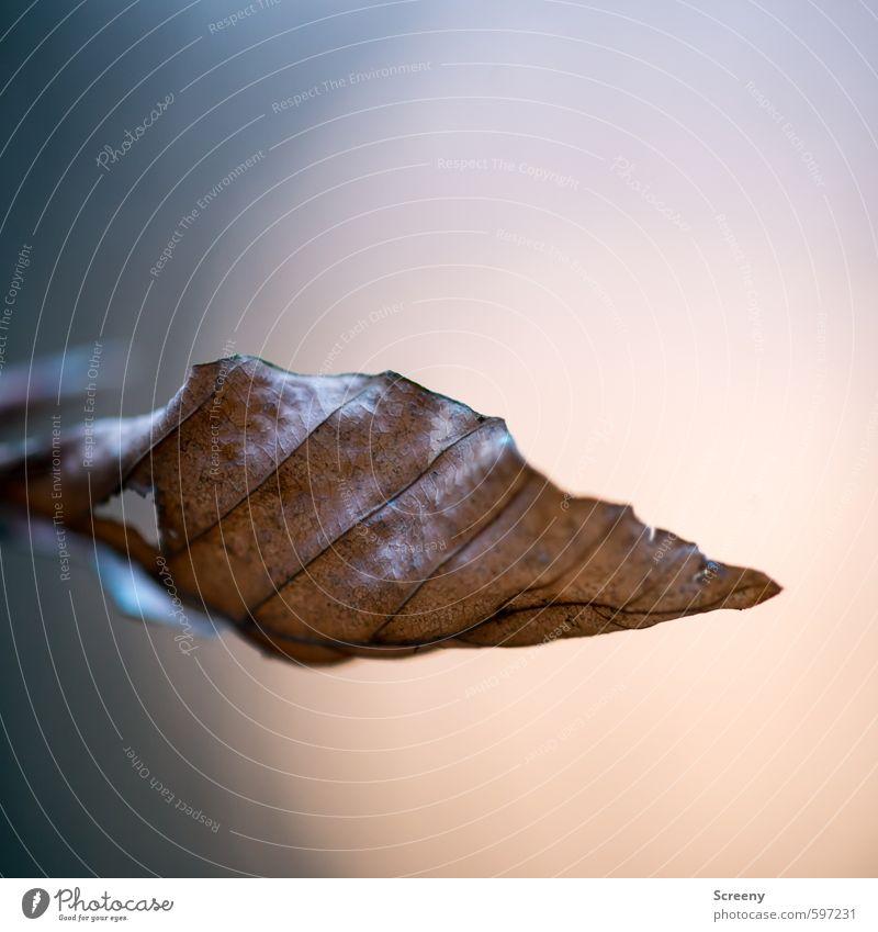 Wandel der Zeit Natur alt Baum ruhig Blatt Winter Wald Leben Traurigkeit Senior Herbst grau braun Stimmung Zufriedenheit