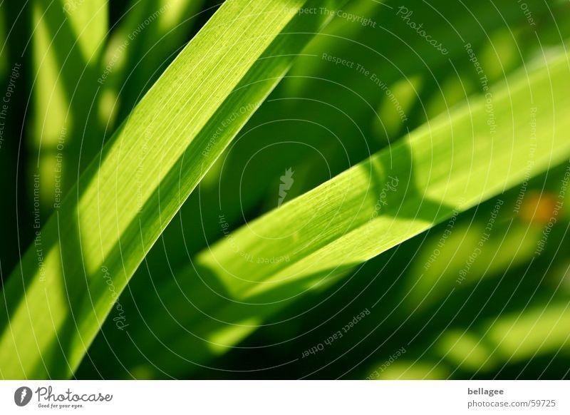 ...so grün grün Lampe Wiese Gras Energiewirtschaft Halm