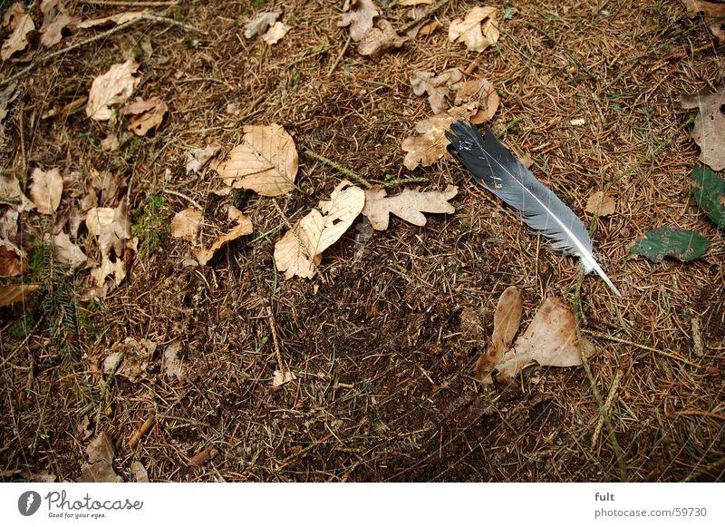 waldboden Natur Blatt braun Feder Bodenbelag Tannennadel