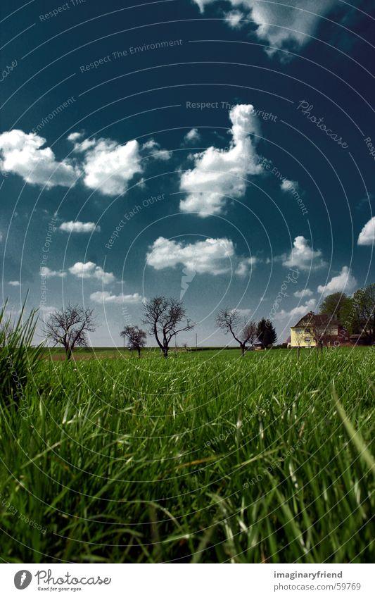 haus bäume gras hoch Himmel Baum Wolken Wiese Gras Landschaft Länder