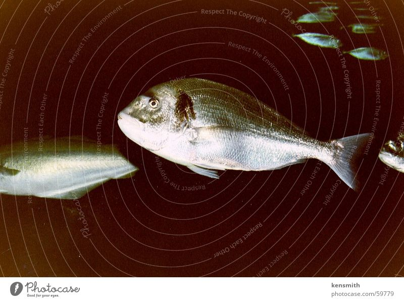 Schwarzes Wasser Wasser Fisch Aquarium