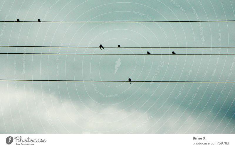 Im Pfrühlink kommen wieder ganz pfiele Pfögel gepflogen Himmel Wolken Vogel sitzen Elektrizität Kabel Draht aufgereiht