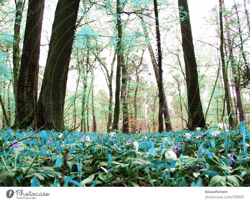 Sicht eines Dahus Natur Wald türkis Baumstamm falsch zyan Waldboden verwaschen Bodenbewuchs