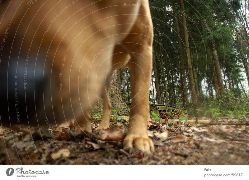 nase Hund Baum Wald Tier Geruch Fell Waldboden Blatt Nase Natur Bodenbelag