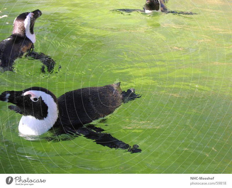 Nur Fliegen ist schöner Wasser Sommer Vogel Pinguin