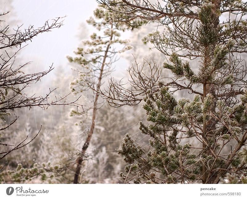 väterchen frost schön Baum Landschaft Winter Wald Stimmung Eis Urelemente Frost Sumpf Moor trösten