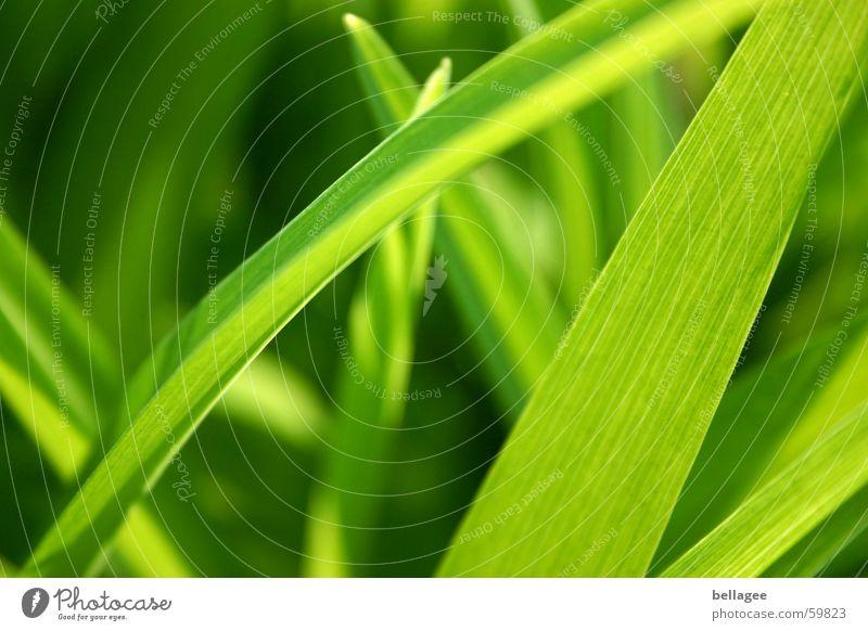 es grünt so...3 Blatt Gras Halm Wiese Licht Frühling Energiewirtschaft Außenaufnahme