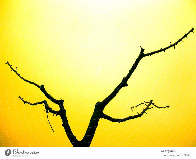 demontree Baum Bar schwarz gelb grell Silhouette Außenaufnahme naked black dark crude flashy location shot