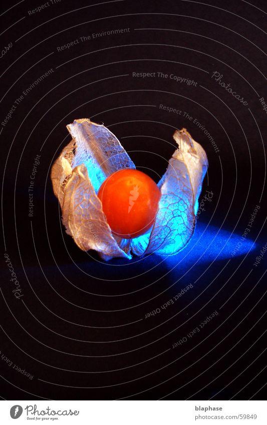 Physalis blue blau schwarz Ernährung träumen orange Frucht Stillleben exotisch arrangiert Physalis Lampionblume