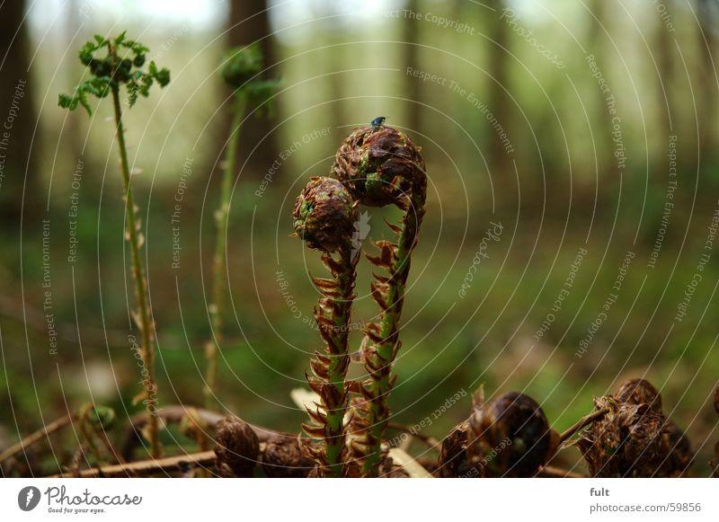 farnkraut Natur grün Wald Bodenbelag Farn Waldboden