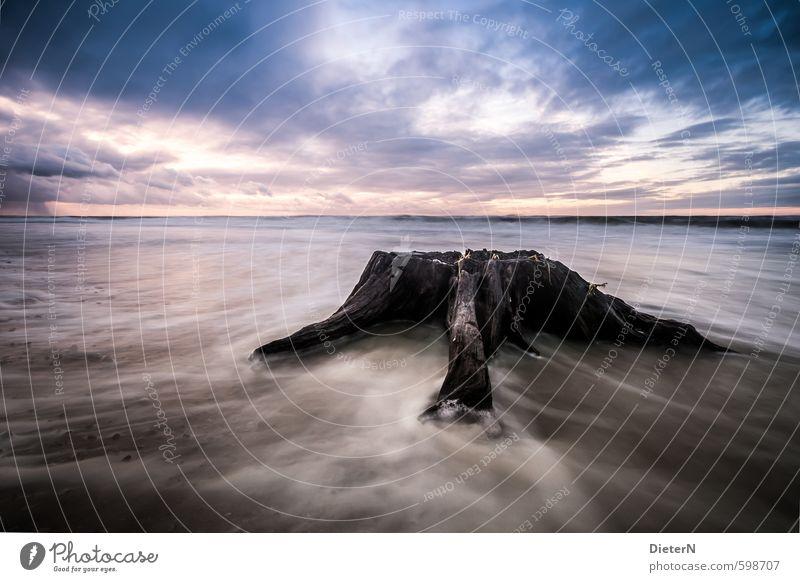 Reste Natur Wasser Himmel Wolken Sonnenaufgang Sonnenuntergang Wind Baum Küste Strand Ostsee blau schwarz weiß Langzeitbelichtung Farbfoto Textfreiraum links