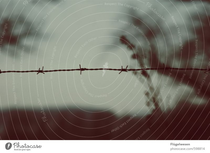 Traum von Freiheit Natur Pflanze Baum Umwelt Freiheit träumen Wetter Wind Klima gefährlich geschlossen Zaun Platzangst Zukunftsangst Unwetter Grenze