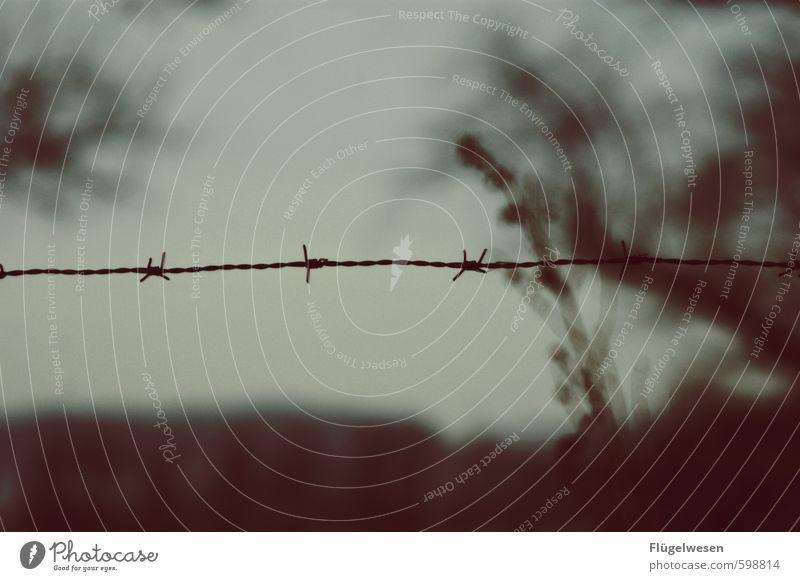 Traum von Freiheit Umwelt Natur Klima Wetter Unwetter Wind Sturm Pflanze Baum kämpfen gefährlich Verzweiflung Grenze Zaun Flucht Fluchtweg Fluchtgefahr