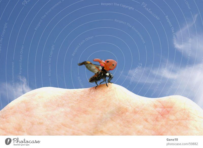 Flieg Käfer flieg.... Hand Himmel Freude Ferien & Urlaub & Reisen Freiheit Glück Luft fliegen Lebensfreude Marienkäfer Unbekümmertheit himmelblau Kinderlied