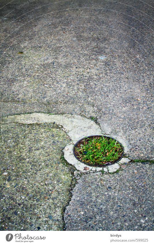 Der grüne Punkt Gras ästhetisch Originalität grau Wandel & Veränderung Kreis rund Asphalt Riss Insel Farbfoto Außenaufnahme Menschenleer Textfreiraum oben