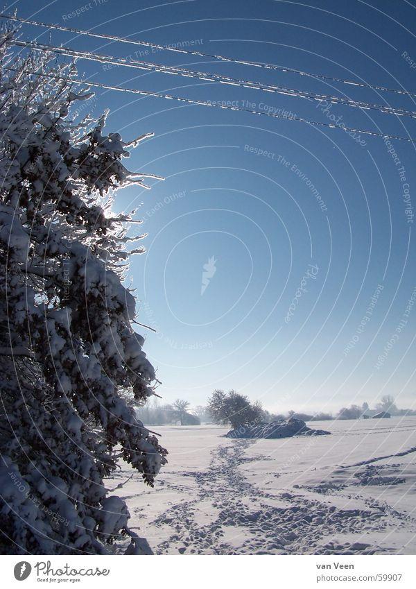 Spuren Himmel blau weiß Sonne Baum Landschaft ruhig Ferne Winter kalt Wege & Pfade Schnee Freiheit Deutschland glänzend Eis