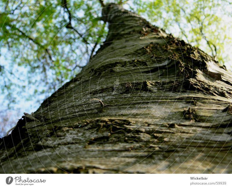 Käferperspektive  - der Weg ist noch weit Baum Baumrinde Frühling Wald Holz hoch Natur