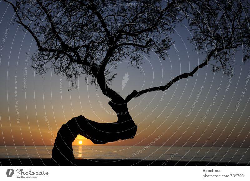 Baum bei Sonnenaufgang Meer Natur Landschaft Luft Wasser Himmel Wolkenloser Himmel Sonnenuntergang Schönes Wetter Küste blau mehrfarbig gelb gold rot schwarz