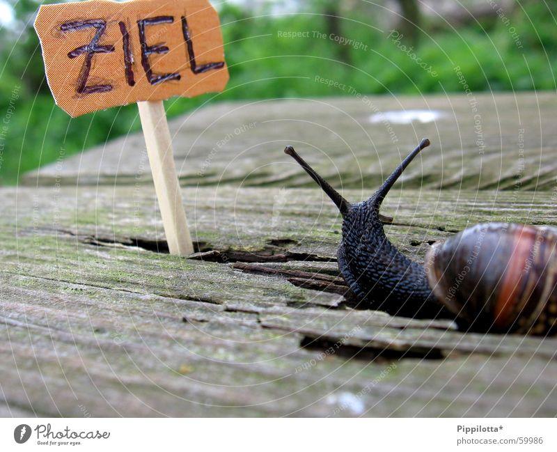 eine schnecke... Natur grün Holz Wege & Pfade klein Suche Schilder & Markierungen Erfolg Bank Ziel Schnecke Streichholz untergehen Stolz langsam