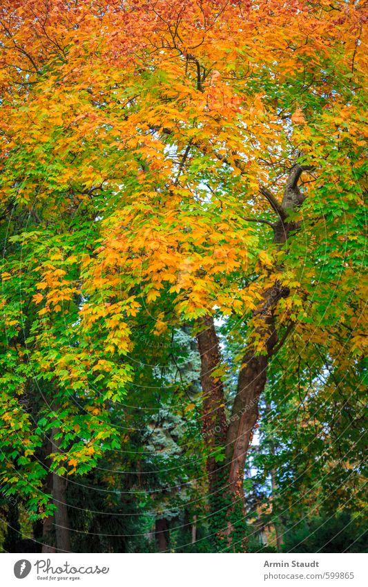 Herbstlicher Baum Natur schön grün Farbe Erholung ruhig Tier Wald natürlich Hintergrundbild Stimmung Park orange ästhetisch