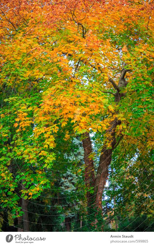Herbstlicher Baum Natur Tier Schönes Wetter Park Wald atmen Erholung ästhetisch natürlich schön grün orange Stimmung Farbe ruhig Hintergrundbild Herbstlaub
