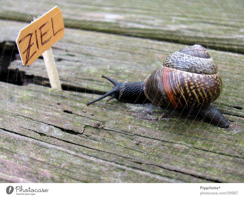 ...auf dem weg... Natur Holz Wege & Pfade klein Schilder & Markierungen Erfolg Ziel Karriere Schnecke Stolz langsam Lebenslauf
