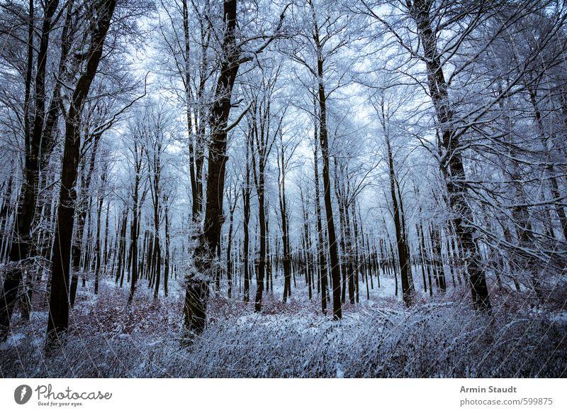 Blick in den verschneiten Wald Natur blau Baum Einsamkeit Erholung Landschaft Ferne Winter dunkel kalt Umwelt Schnee Stimmung Perspektive Abenteuer