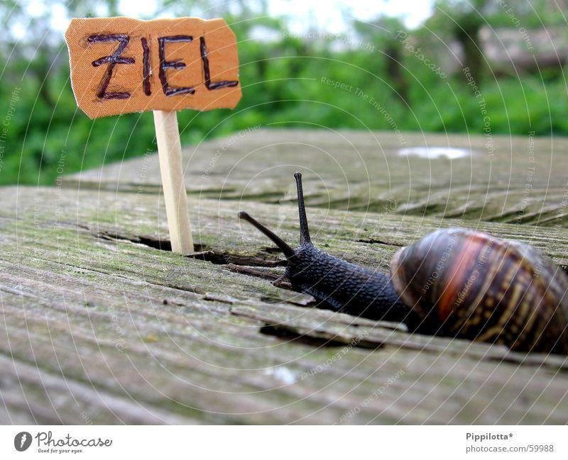 ...ins Ziel Natur grün Leben Holz Wege & Pfade klein Suche Schilder & Markierungen Erfolg Beruf Karriere Schnecke Streichholz untergehen Stolz