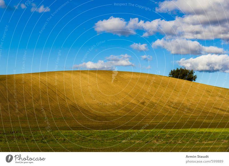 Schlichter Hügel mit Baum und blauem Himmel Sommer Natur Landschaft Erde Wolken Schönes Wetter Feld atmen entdecken einfach braun Stimmung authentisch Fernweh