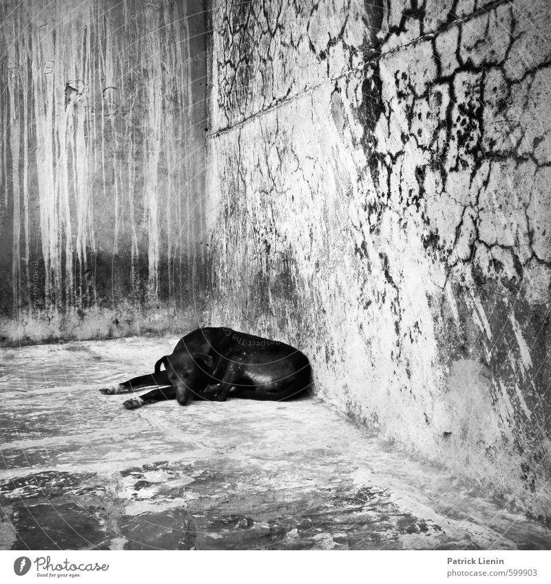 Hund Einsamkeit Tier dunkel Wand Traurigkeit Mauer natürlich dreckig frei Wildtier Armut bedrohlich schlafen Schutz Sicherheit