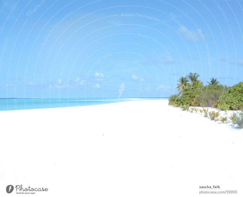 Malediven Meer Strand Ferien & Urlaub & Reisen Erholung Palme