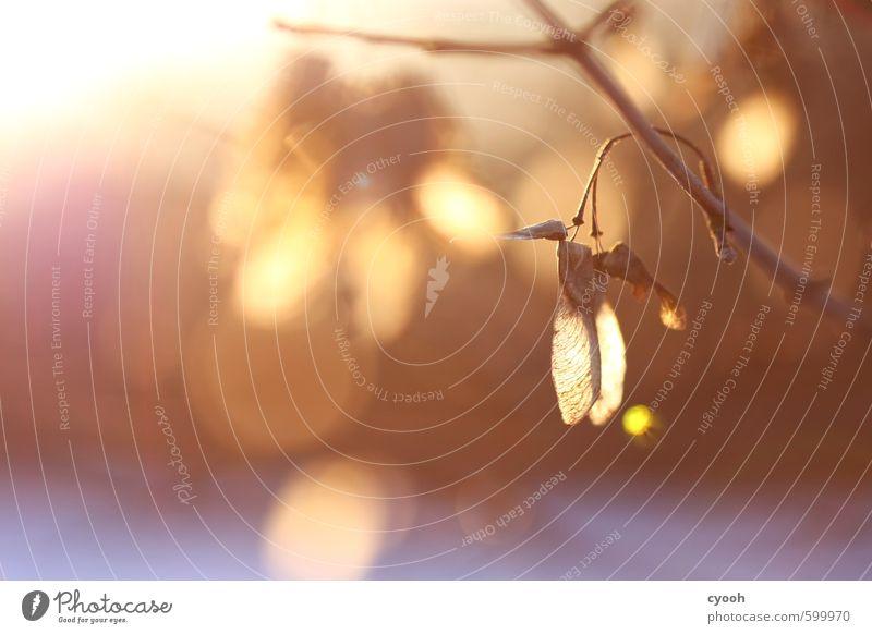 Licht. Natur blau schön ruhig Winter Wald Wärme Herbst braun Stimmung hell träumen Zufriedenheit leuchten Wachstum gold