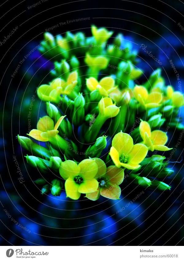 Flowers gelb Blume grün flowers defocused blue blau kimako Unschärfe